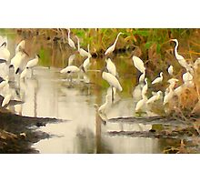 Storks and Egrets Watercolor: Survival   Photographic Print
