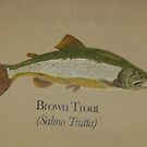 Brown Trout by cdcantrell