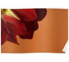 Dahlia Closeup with Orange Background Poster