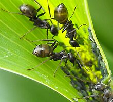 The Ants Go Marching In by sternbergimages
