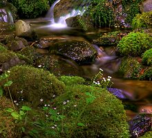 Silk Cascades - Olympic Mountains National Park by John Absher