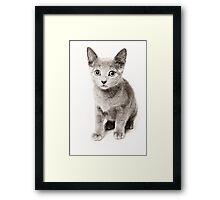 cute fluffy kitten Framed Print
