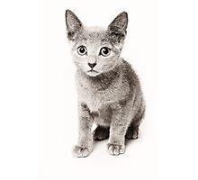 cute fluffy kitten Photographic Print