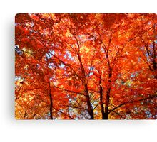 Soooo Autumn Canvas Print