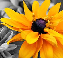 Yellow On Black & White by itsmymoment