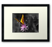 A Splash of Color (In an Otherwise Dull World) Framed Print