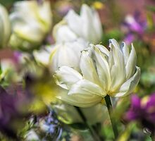 Spring's fading Bouquet  by John Rivera