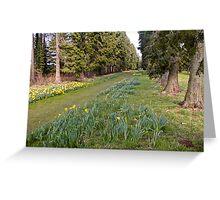 Daffodill Path Greeting Card