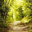 Take a walk by Milos Markovic