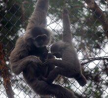 Monkey love by asha18