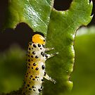 The Hungry Catterpillar (not! - read on...) by George Parapadakis (monocotylidono)