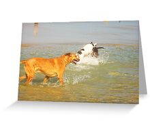 Dogs Playing Greeting Card