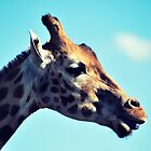 Cheeky Giraffe by Antony Cole