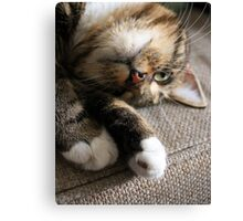 Upside Down Cat Canvas Print