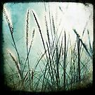 Grass series #1 by Jackie Cooper
