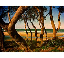 Tropicale Photographic Print