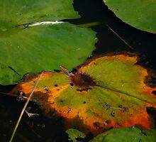 Lily Pad by Jan  Harrison