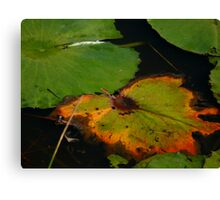 Lily Pad Canvas Print