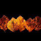 Birch by James Coard