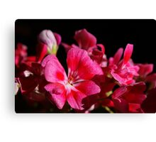 Pink never looked so good! Canvas Print
