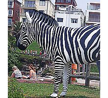 Zebra but not in a Zoo Photographic Print