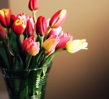 tulip bouquet by kirsten116