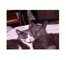 Two cats snuggling up together Art Print