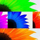 Sunflower Interrupted by Robin Webster