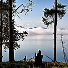 Fog on Yellowstone Lake by Teresa Zieba