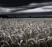 Harvest on its way by Andy Freer