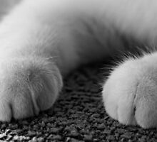 Please 'Paws' for a moment by Alphafish