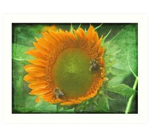 Sunflower and Bumblee Art Print