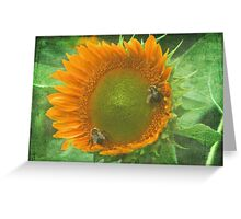 Sunflower and Bumblee Greeting Card