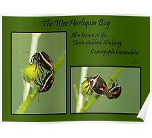 Wee Twice-stabbed Stink Bugs Poster