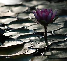 Lily Pad Sprout, Balboa Park San Diego by staasta