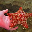 starfish by Coloursofnature