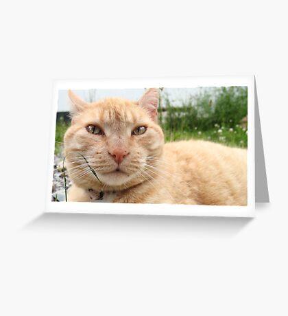Neighborhood Cat 3 Greeting Card