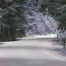 lavender road by ubumebme