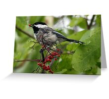 Black-Capped Chickadee With Elderberry Greeting Card