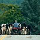 vermont state road.... by Roslyn Lunetta