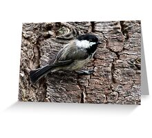 Black-Capped Chickadee Clinging to Bark (Frame 1) Greeting Card