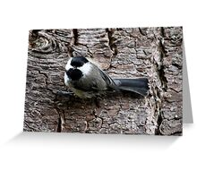 Black-Capped Chickadee Clinging to Bark (Frame 2) Greeting Card
