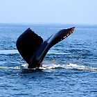 Humpback in Monterey Bay  by Peggy Berger