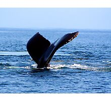 Humpback in Monterey Bay  Photographic Print