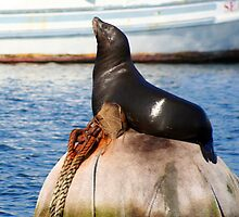 Sea Lion on Buoy Rock  by Peggy Berger