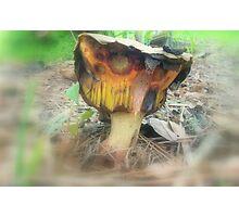 Freaky Fungus Photographic Print