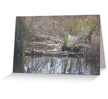 Gator in the Path Greeting Card