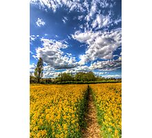 The Farm Footpath Photographic Print
