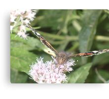 Red Admiral butterly Canvas Print