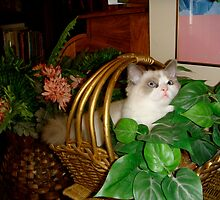 Oh, This is NOT My Cat Bed?  Oops! by Carol Clifford